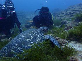 ハンパなく海が青い屋久島!ダイビングでウミガメや魚といっぱい遊ぼう!|鹿児島県|トラベルjp<たびねす>
