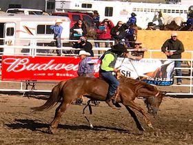 ロデオ!乗馬!アメリカ・モンタナでカウボーイ体験