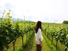 ワイナリー見学&飲み比べを。星野リゾート リゾナーレ八ヶ岳で進化した日本ワインに舌鼓