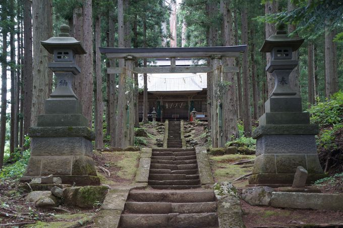 まるでトトロの森に囲まれた高倉神社