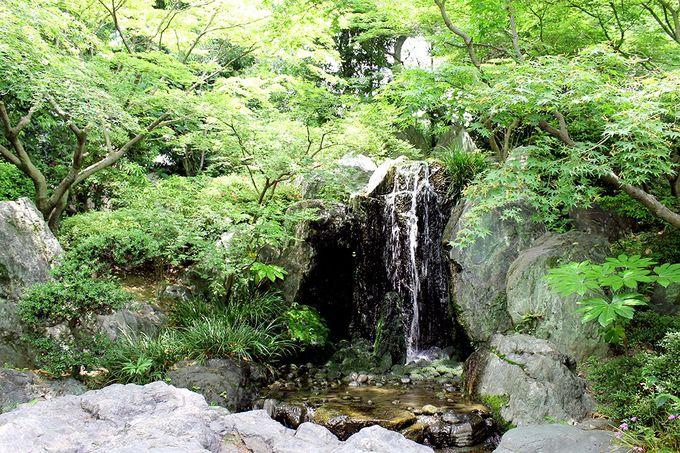 ハルカスを借景に 都会のオアシス「極楽浄土の庭」