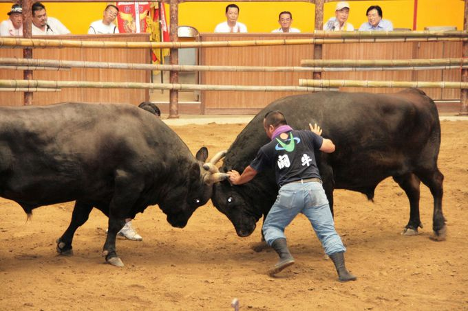 祭り期間中は闘牛大会「和霊大祭場所」も開催