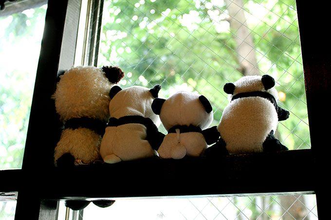店主のパンダコレクションが並ぶ 癒しの空間