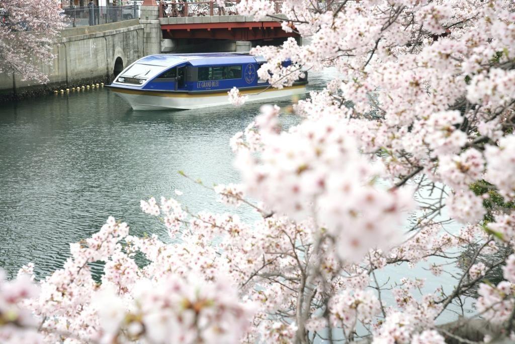 期間限定!約500本の桜のトンネルをくぐりぬける「大岡川桜クルーズ」