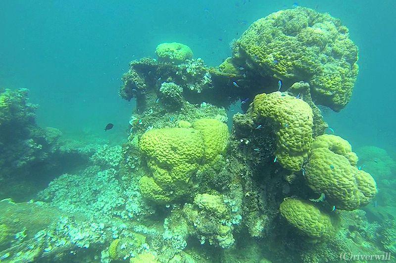 映画「タイタニック」にも使用された世界一の沈船ダイビングスポット
