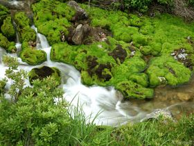 天然ビロード緑のじゅうたん!奥草津「チャツボミゴケ公園」の苔モフワールドがハンパない|群馬県|トラベルjp<たびねす>