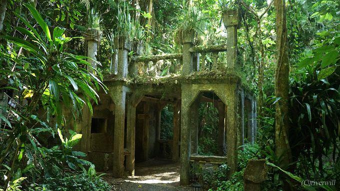 ケアンズ郊外、熱帯ジャングルに包まれた「パロネラパーク」とは