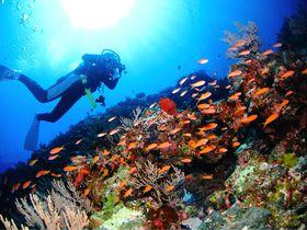 沖縄、伊豆…国内ダイビングツアーでライセンス取得