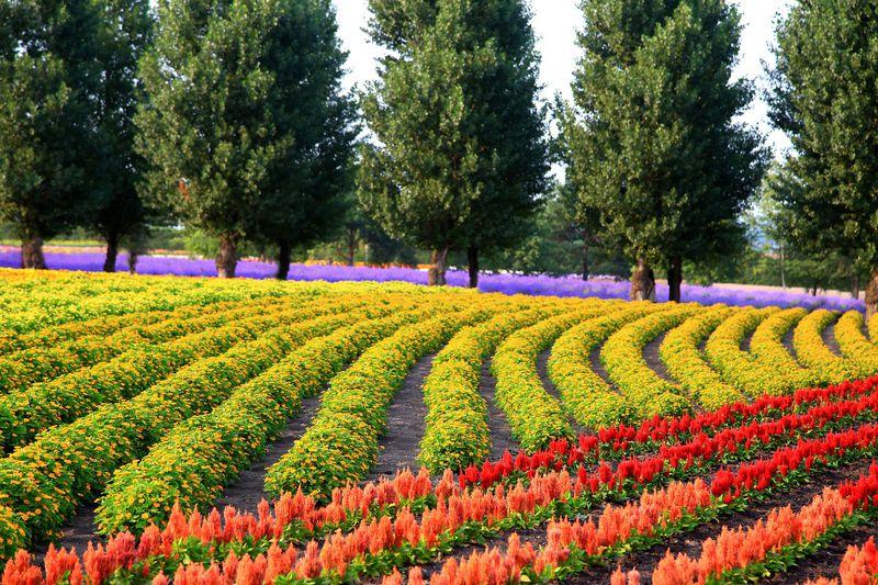 夏と冬で違う?北海道旅行の予算、料金・費用は?