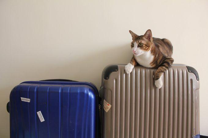 番外編 その1 スーツケース