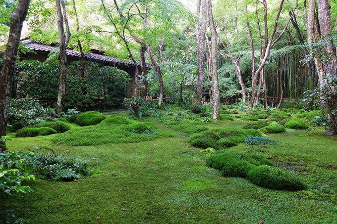 日本庭園の3大様式「池庭」「枯山水」「露地」