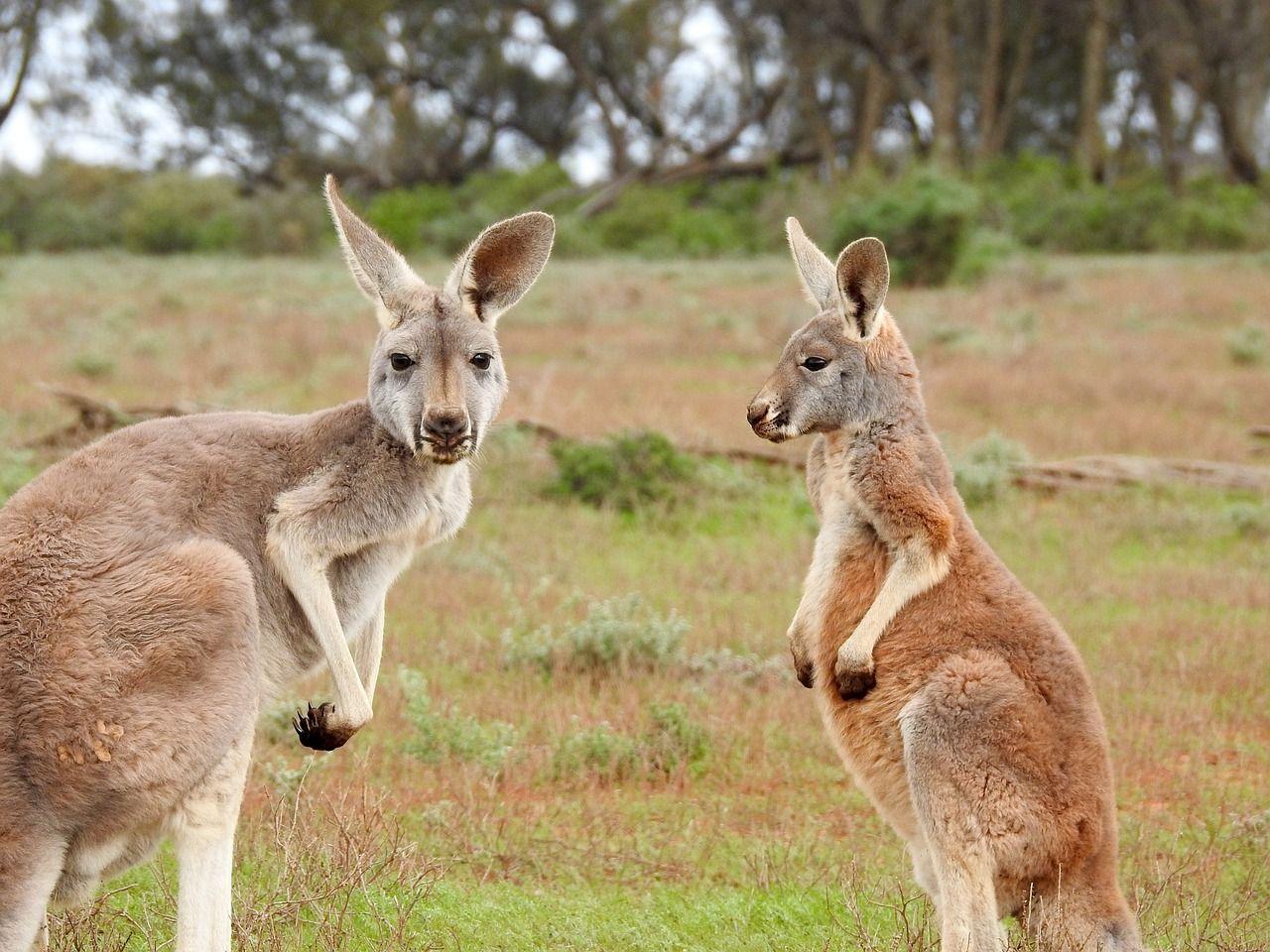 アメリカとオーストラリア渡航で必要な「電子渡航証明書」