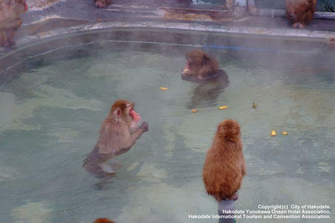函館なのに常夏気分?「函館市熱帯植物園」