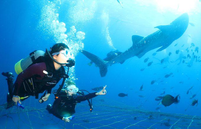 海の生き物を間近で見られる「オキナワ マリオットリゾート&スパ」
