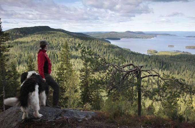 コリ国立公園、 フィンランド人の心の故郷を訪れてみる