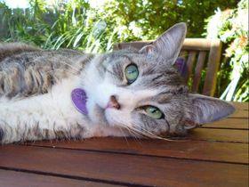 猫がいる海外の民泊に泊まろう!Airbnbで予約できるおすすめ17選